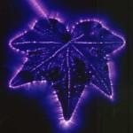 Kirlian Image of a Leaf